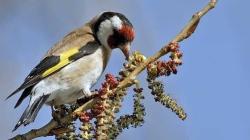 Vogelarten Auswahl